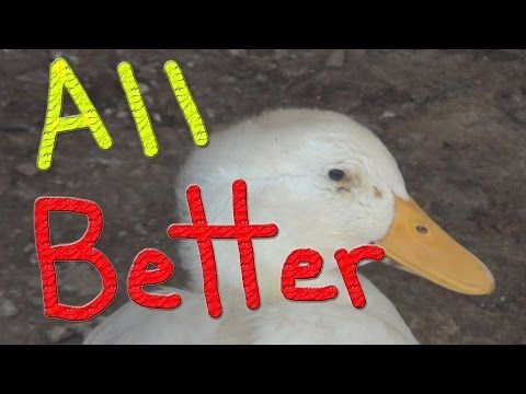 Dug Is Doing A Great Job… #126 Ducks For The Homeless - YouTube