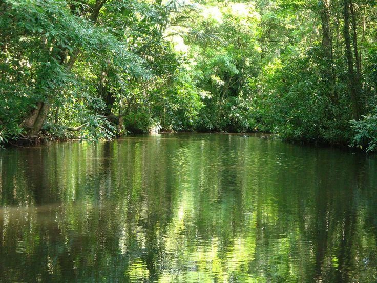 Canales, ríos, lagunas, playas y pantanos exuberantes de vegetación, llenos de vida y biodiversidad, en el Parque Nacional Tortuguero. ¿Te vienes?