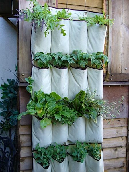 Growing herbs in shoe organizer ...perfect for small spaces