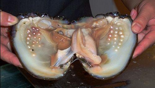 owlberta:congenitaldisease:A clam with pearls inside.this ...