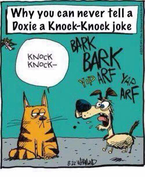 Why you can never tell a knock knock joke to a Doxie.