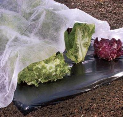 Telo in tessuto non tessuto piante orto 17 gr - H 1,60 x L 10,00 m in sacco TNT