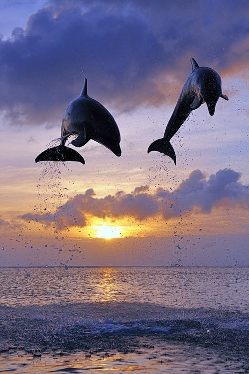 Dolphins - Focus On the Positive: The Marine & Oceanic Sustainability Foundation www.mosfoundation.org