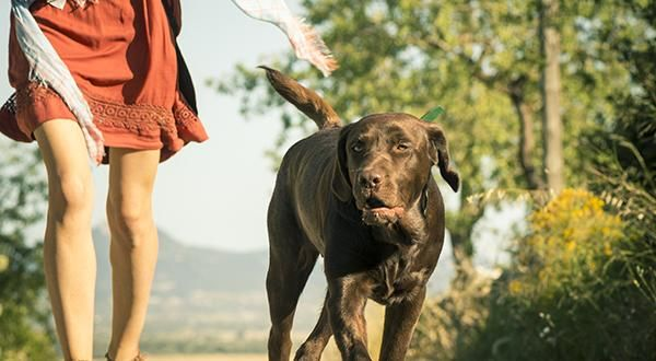 What You Need To Know About Therapy Dogs Figo Pet Insurance Dog Cancer Sick Pets Pregnant Dog
