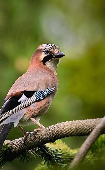 So locken Sie mehr Vögel in Ihren Garten