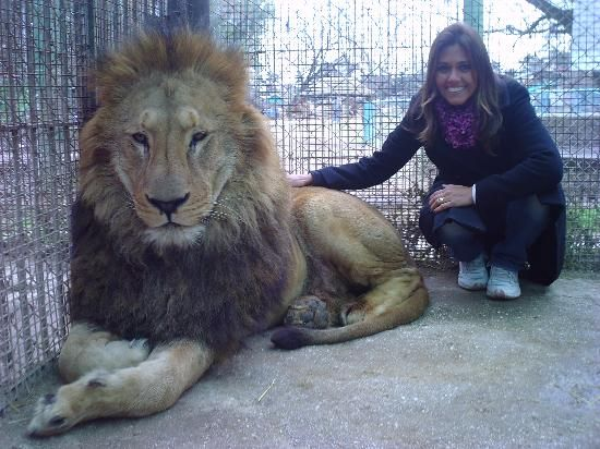"""""""Petting Zoo"""" in Argentina where you can pet lions, tigers...everything! So cool"""