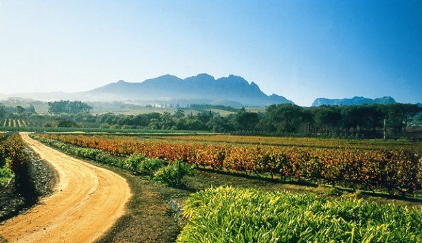 Spend the day sipping and swirling proudly South African wines at Beyerskloof wine estate in Stellenbosch.