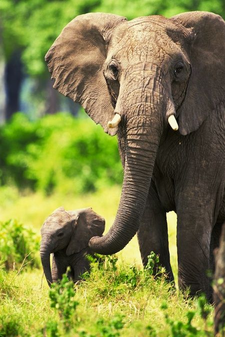Top 10 Things to Do This Weekend in Phoenix: Family Edition: Breakfast with the Elephants  #Zoo #Phoenix #Animals  www.AZFoothillls.com