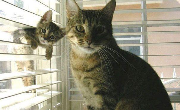 <p>No es photobomb, sólo el entrenamiento de este pequeño gato ninja. (Instagram, Reddit, Facebook) </p>
