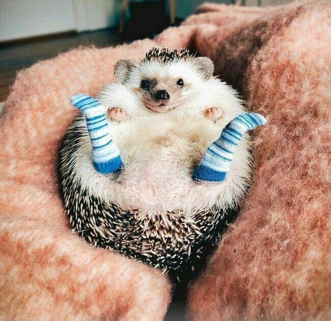 Funny Animal Photos Samye Milye Zhivotnye Milye Detenyshi