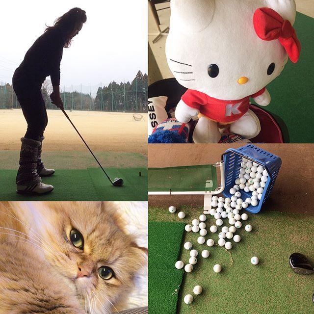 昨日のれんすードライバー君! ん‥‥ん‥‥ 何打ってもインパクトの瞬間ピョンって跳ねてるwww #ゴルフ#ゴルフ女子#ゴルフ練習#ゴルフバカ#ドライバー#メンズドライバー#ゼクシオ#XXIO#ぴょん#ハローキティ#ヘッドカバー#お気に入り#愛猫#ラボ#golf#golfstagram