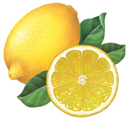 Whole lemon with a cut half lemon straight on view with leaves