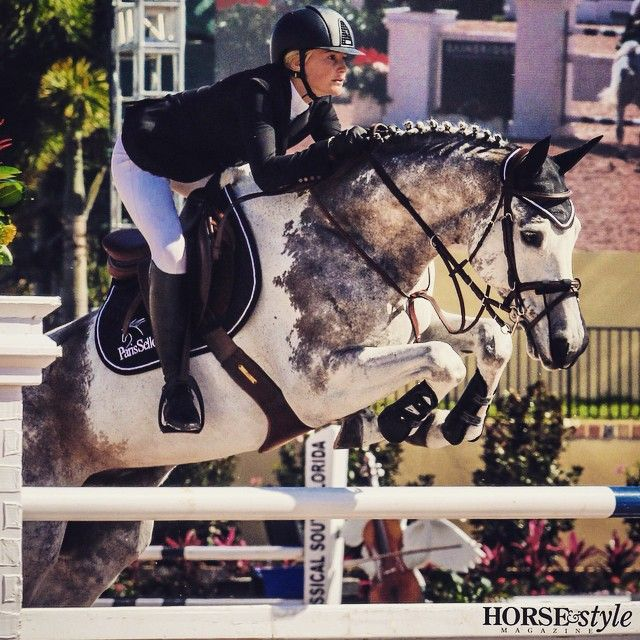 """""""Spotted"""" Cornet, everyone's favorite dappled grey silvery paint show jumper today at #wef2015 #thatsthetechnicalterm #youseewhatwedidthere @parisanns  (at WEF - Winter Equestrian Festival)"""