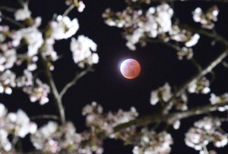Súťaž o najkrajšie fúzy, zatmenie Mesiaca a iné najlepšie fotky týždňa