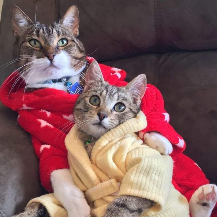 Cats In Clothes, Cat Clothing, Baby Cats, Kittens, Facebook, Babies, Neko,  Cute Kittens, Babys