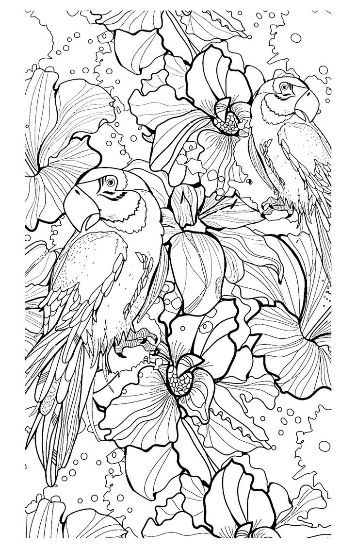 Coloring book yves saint laurent - Free Coloring Page Coloring Adult Parrot Difficult Complex Coloring Page Of