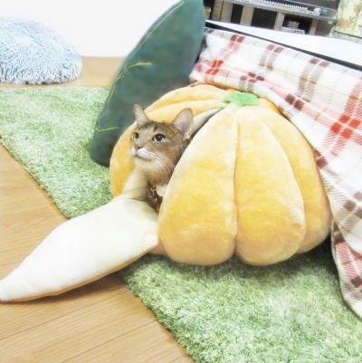「こたつでみかん」+「猫」=「猫はみかんで丸くなる」 みかんベッドにうっとりのニャンコがかわいい