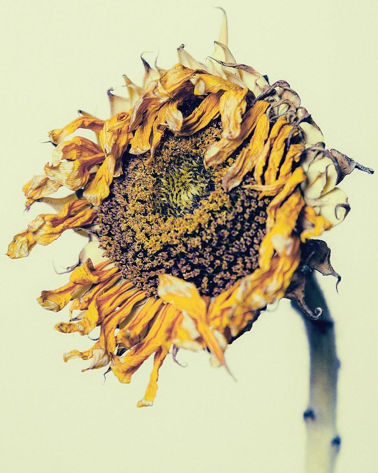 1000+ images about Botanical photography on Pinterest