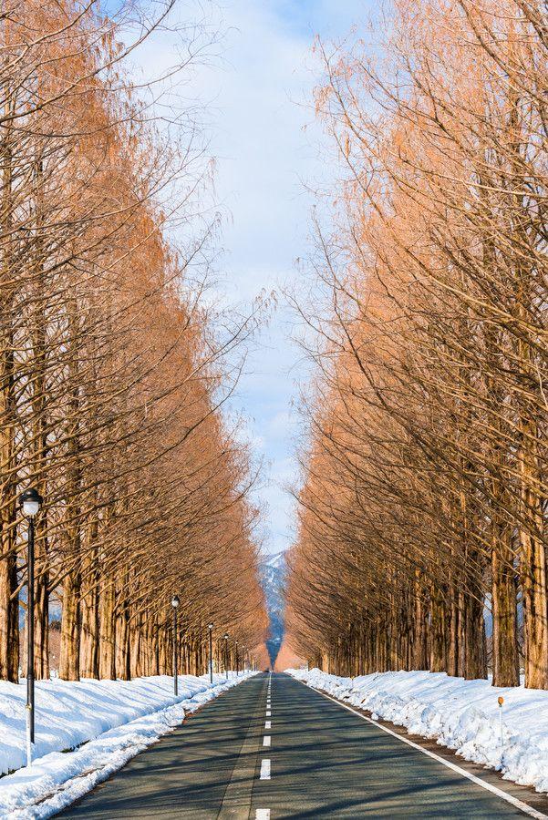 Winter road, Takashima, Shiga, Japan