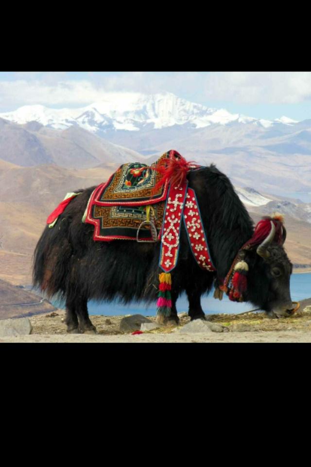 The Himalayas, Tibet