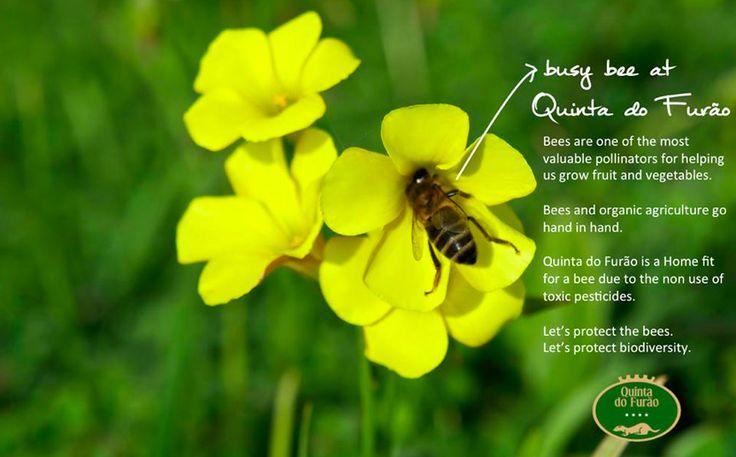 A busy bee at Quinta do Furão.