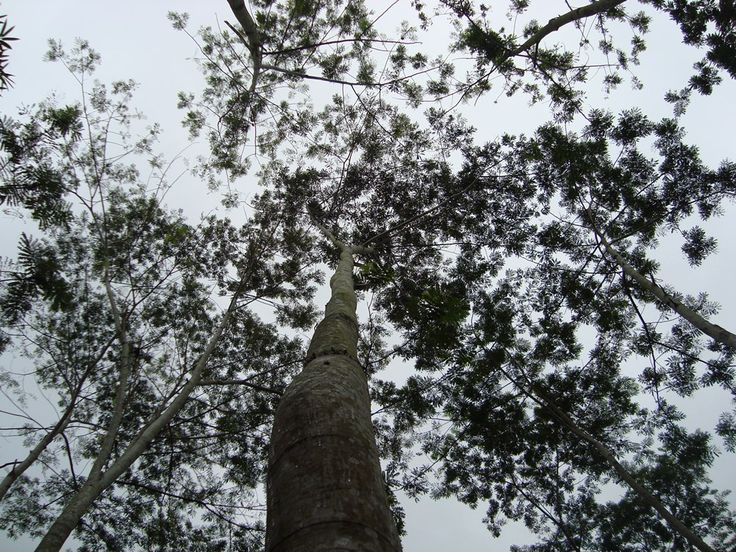 i love this tree.