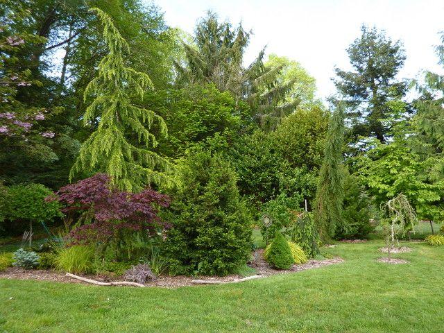 May Yard   Conifers Forum   GardenWeb · Woodland GardenShrubsGarden Ideas Yards