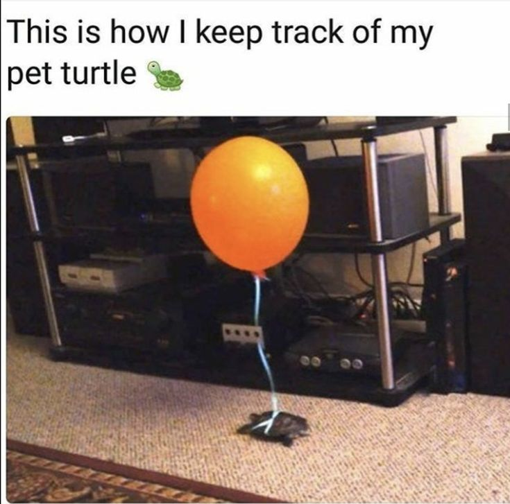 How I keep track of my pet turtle