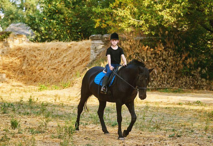 Berkuda Mampu Meningkatkan Kecerdasan Anak