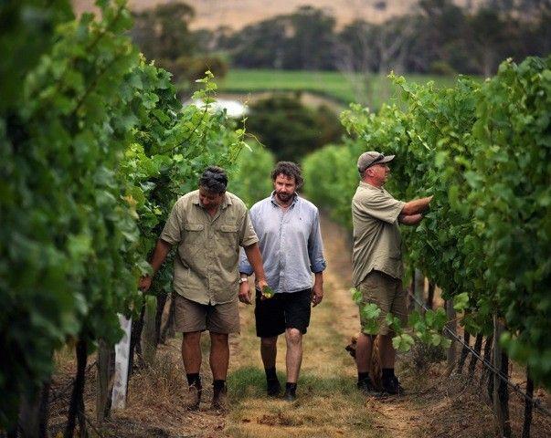 via BKLYNcontessa life+style field guide :: goaty hill vineyard :: tasmania