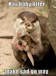 Soooo cuteMothers, Sweets, Baby Otters, Adorable, Baby Animals, Cute Babies, Sea Otters, Mom, River Otter