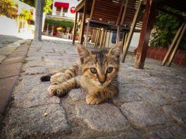 Deklanşör Sesi - Bozcaada'nın Kedileri http://deklansorsesi.com/bozcaadanin-kedileri/