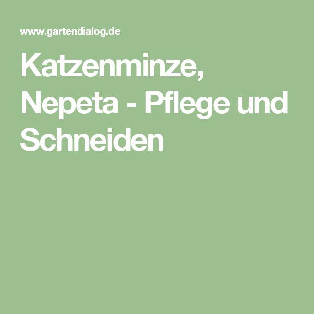 25 best ideas about katzenminze on pinterest. Black Bedroom Furniture Sets. Home Design Ideas