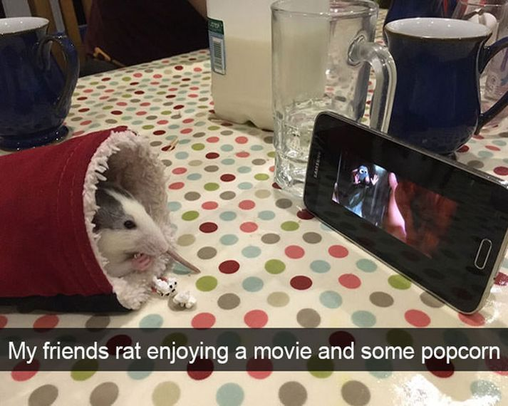 Animal Memes – 40 Pics