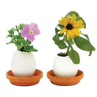 Such a cute idea. Egglings. Just crack & grow flowers or herbs.