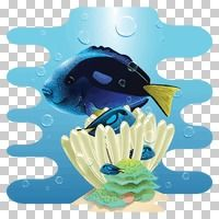 Popular : Yellowtail damselfish