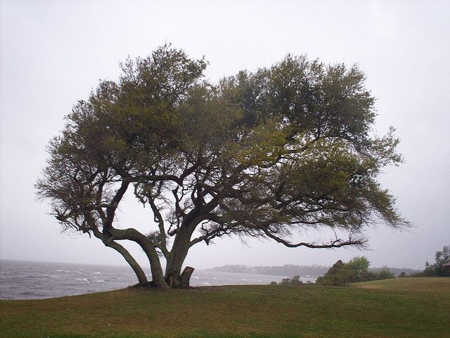 Tree in the wind by General Wesc, via Flickrcc license