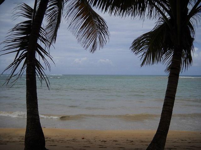 """Wo liegt die wahre Schatzinsel? Cocos Island Fiktion oder Wirklichkeit. Von Schatzsuchern und Seeräubern sowie der berühmtesten Insel der Welt. Der Roman """"Reisen ins Licht der Sterne"""" von Alex Campus."""