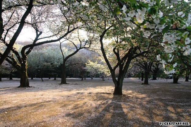 destinations tokyo frommers favorite experiences