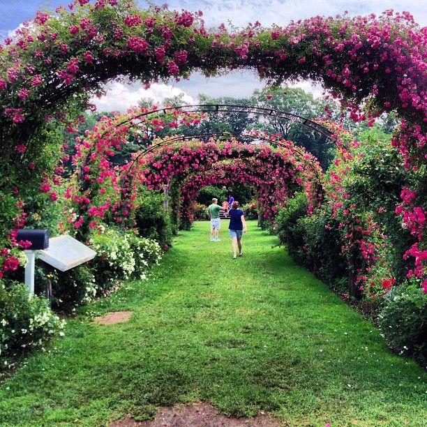 Rose Garden Freeman Gardens: Elizabeth Park Rose Garden, CT