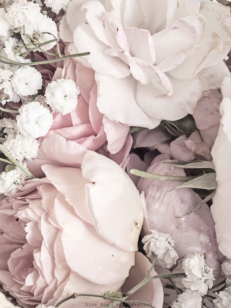 palest pink + snow white blooms