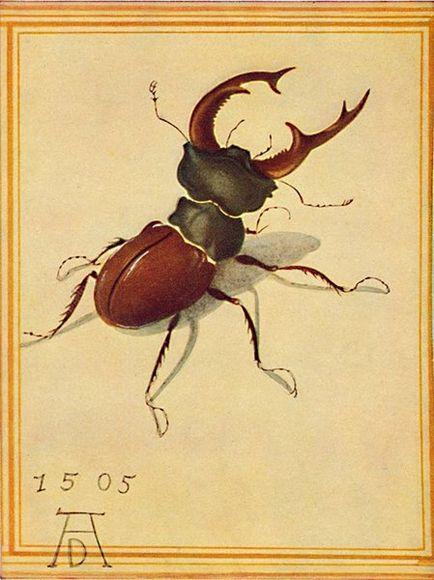 Fig.1 Lucane Cerf-Volant