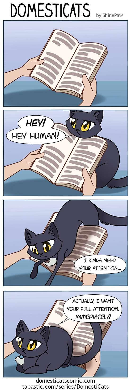 DomestiCats :: Reading | Tapastic Comics - image 1