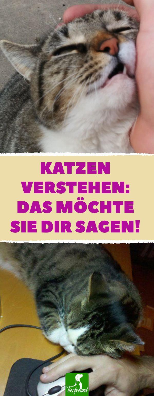Die Signale von Katzen richtig deuten – so verstehst du dich mit der Mieze! #kat… – Anette Seitz