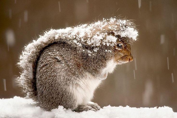 Squirrel tail umbrella
