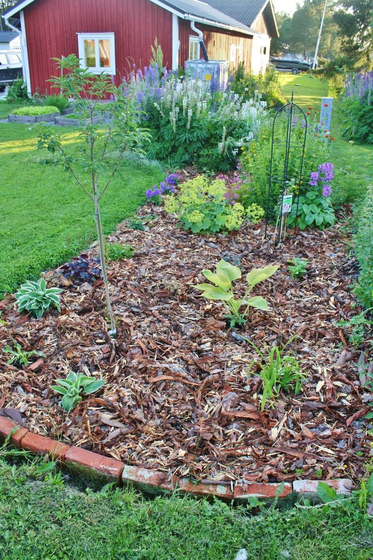 New flowerbed syringetree hosta clematis