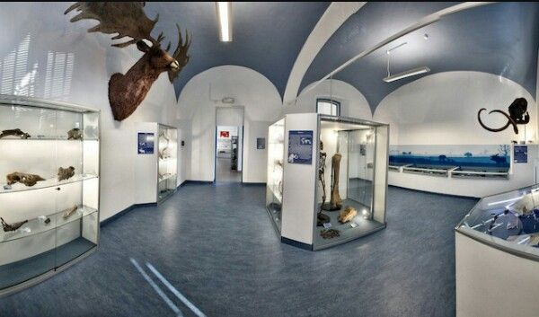 Museo paleoantropologico di san daniele po