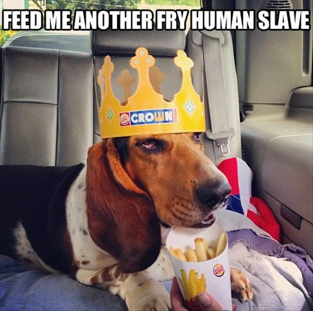 Dear Bud actually prefers waffle fries but you don't get a crown at Chick Fil A...hmmm. lol!