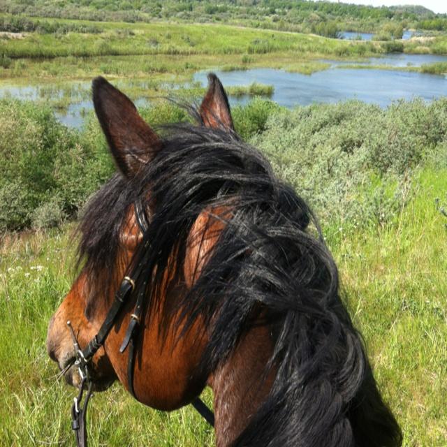 Udsigten fra hesteryg