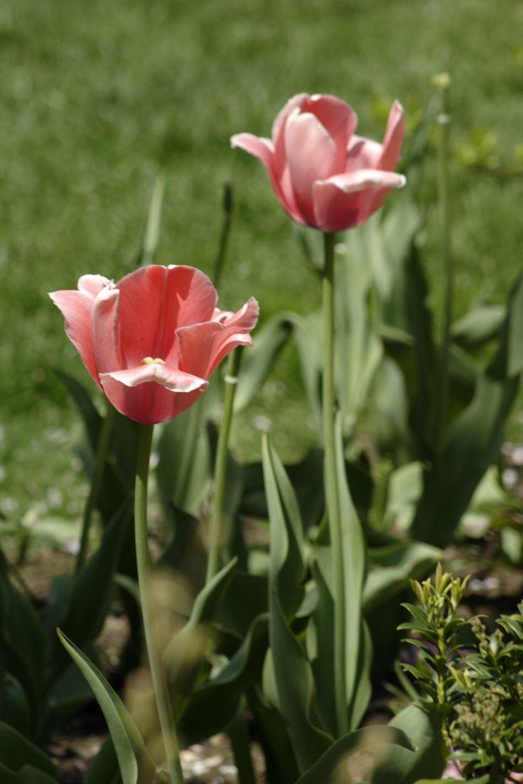 envoyer un bouquet de fleur pas cher 10 #fleurs #bouquet